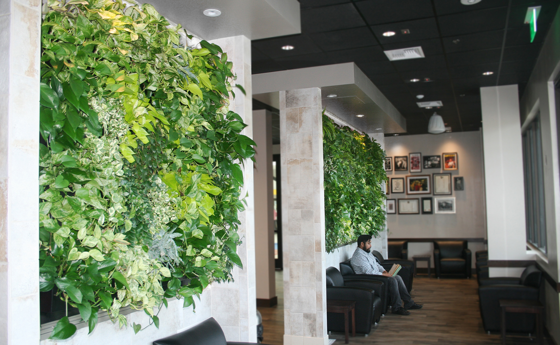 green wall office wood air quality benefits livewall green wall system