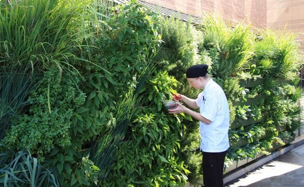 Vertical Gardens bright ultra-fresh flavor to professional kitchens.