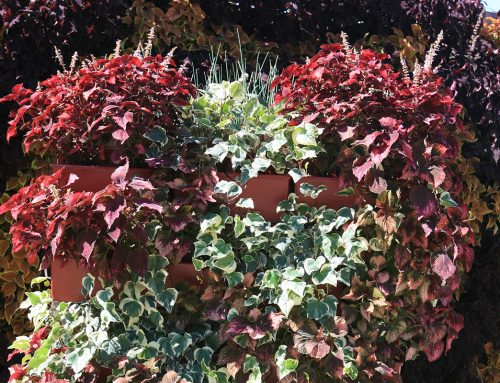 Mobile Living Wall with Algerian Ivy and Coleus