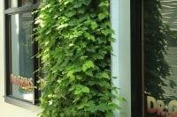 The B.O.B. uses a living wall to grow hops.