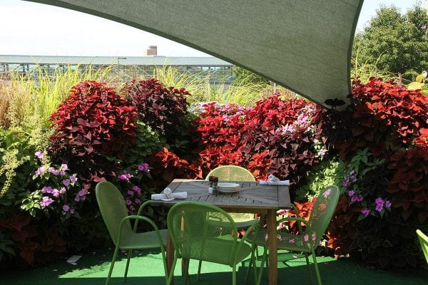 A dining table at The BOB's patio in front of a coleus-filled section of LiveWall.
