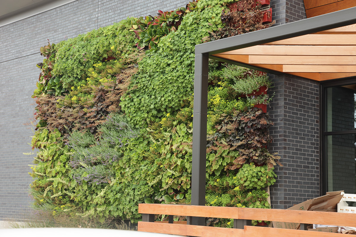 Combing plants creates a great contrast of colors and textures in a vertical garden.