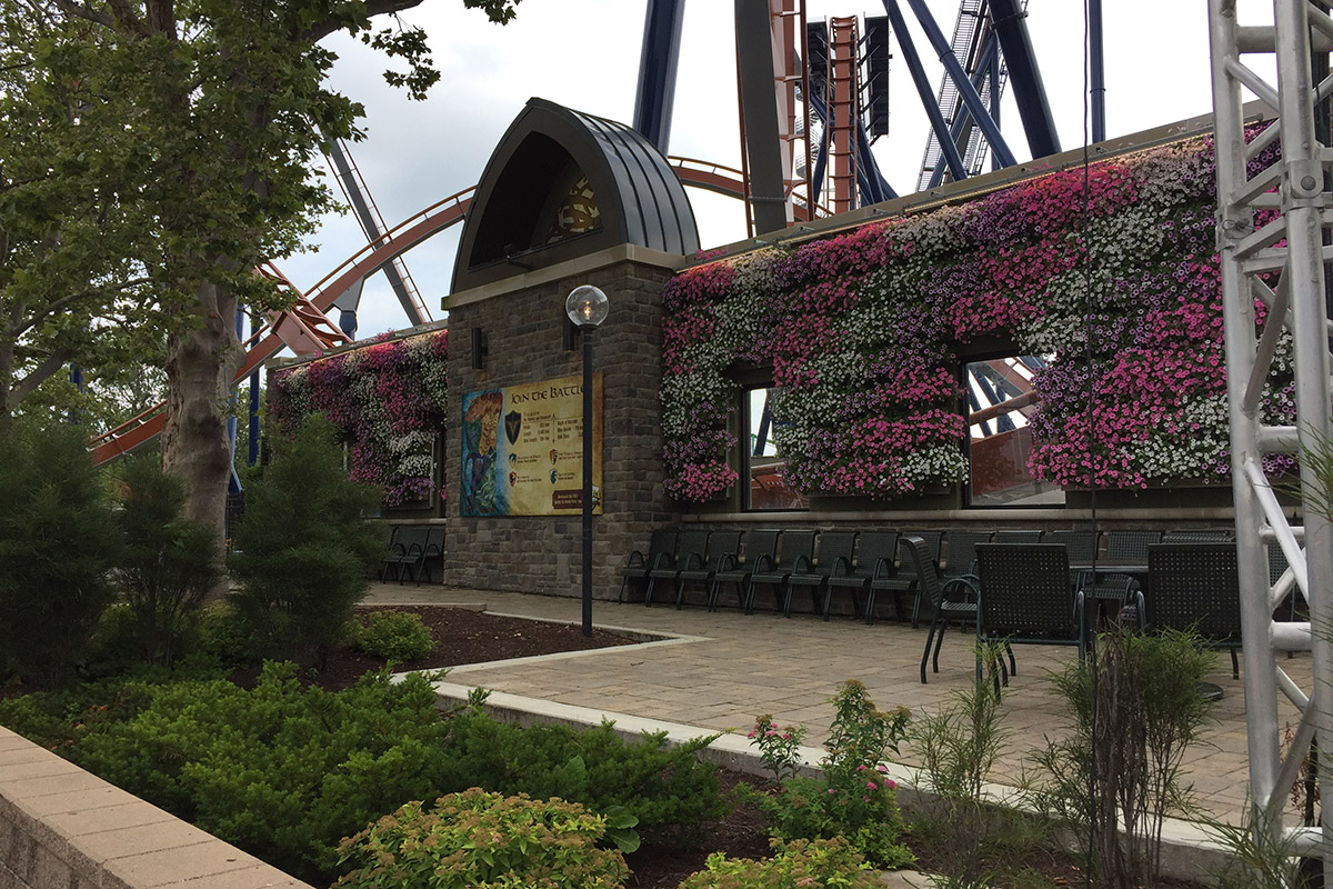 Cedar Point green wall planted with petunias in mid-summer.