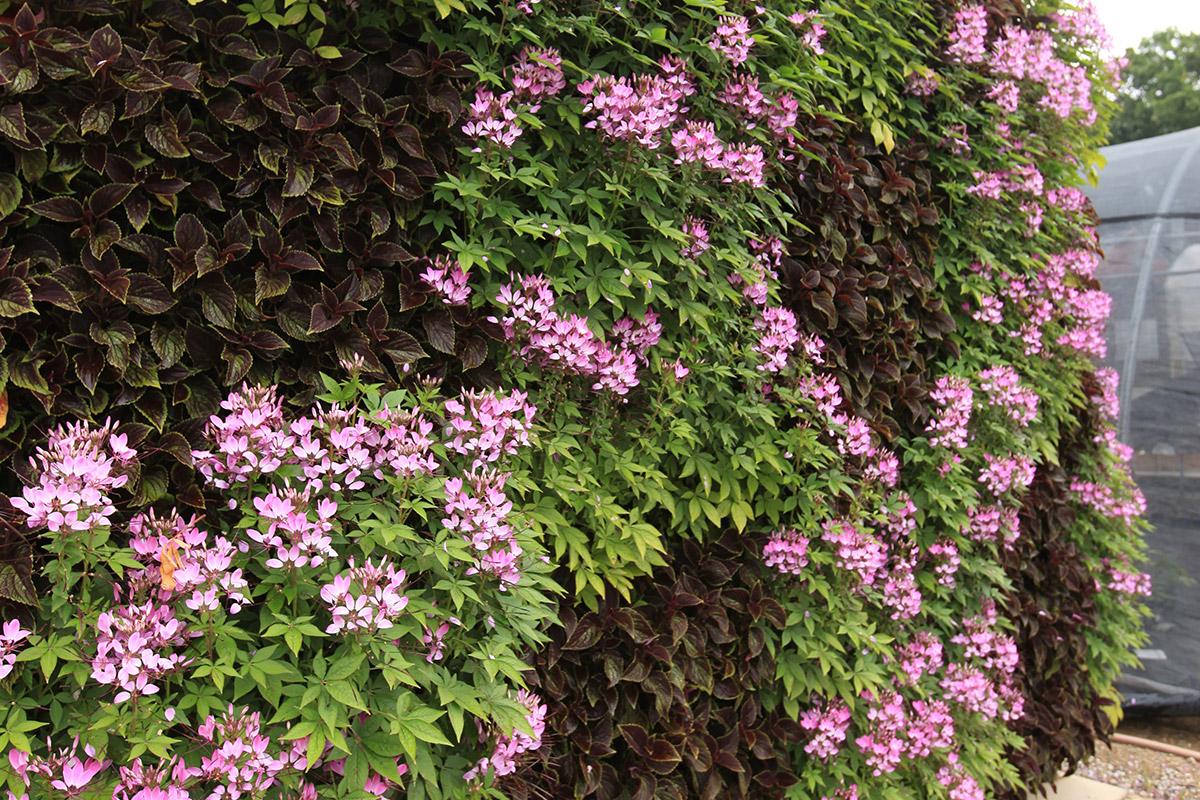 Living wall blooms in a checkerboard pattern.