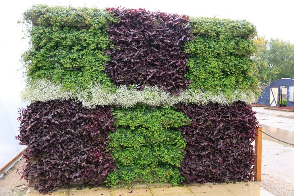 Checkerboard-Patterned Living Wall