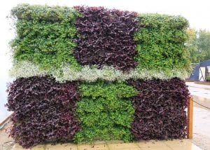 Various plants create an illustrative green wall planting.