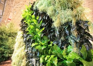This living wall has a variety of textures from different plants.