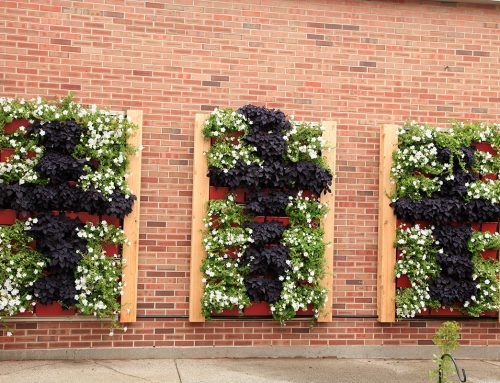 Muskegon Catholic Central – Cross-Shaped Green Wall Plantings