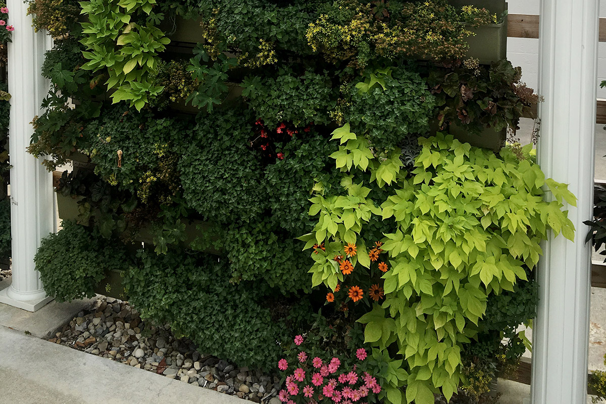 Outdoor green wall in Delaware County, Ohio.
