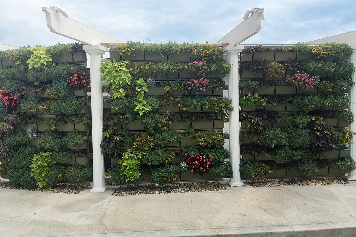 Senior residents encouraged to interact with the campus's living wall.