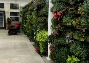 Living walls create an inviting atmosphere.