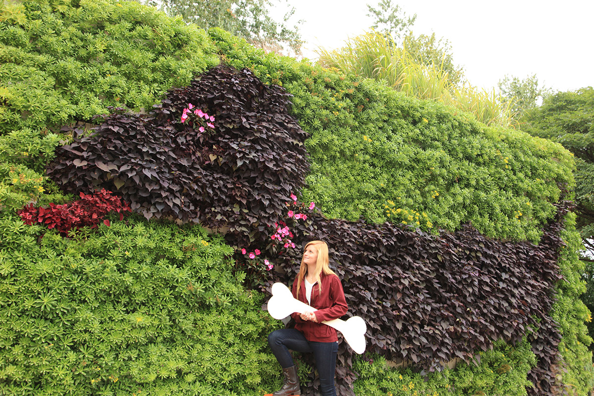 Vertical gardens are versatile and can be used to create designs.