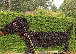 A dog-shaped living wall design.