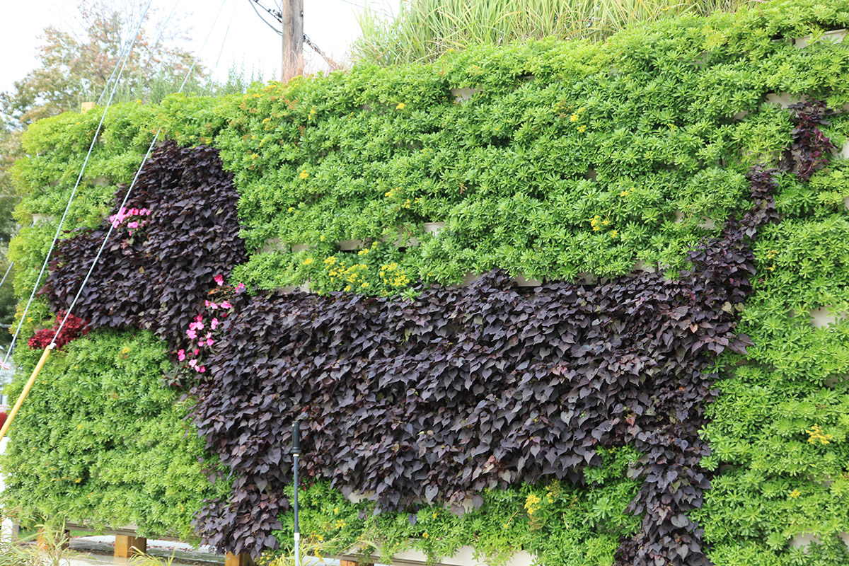 Illustrative living wall forms a dog pattern.