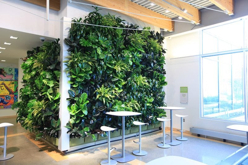 Indoor living walls by LiveWall.