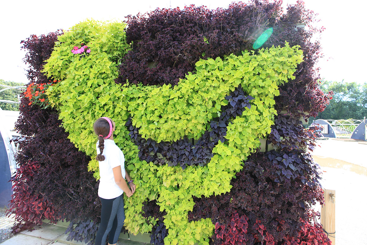 Plants can be used to make fun designs in vertical gardens.