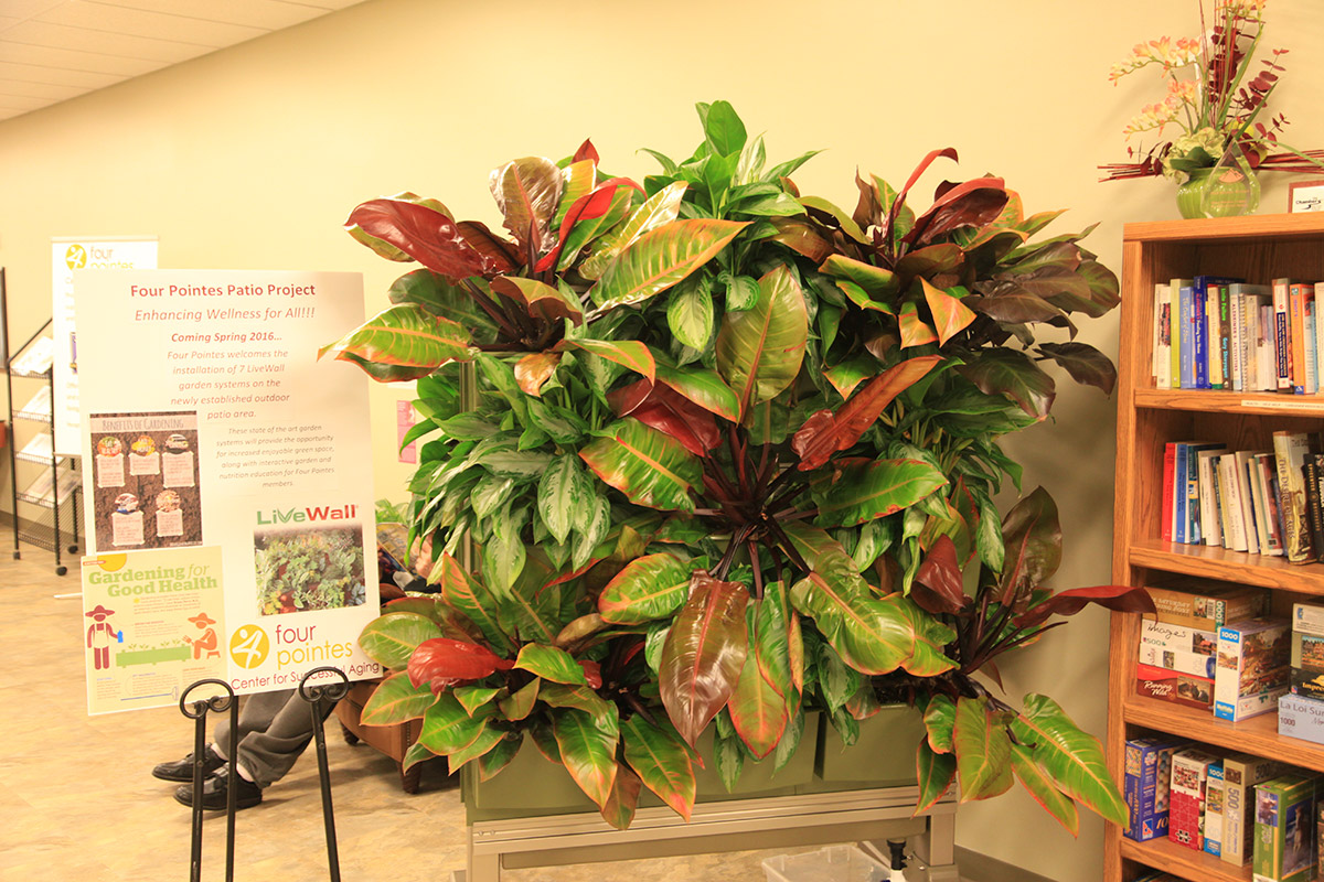 LiveScreen Indoor Display used to demonstrate living walls at senior center.