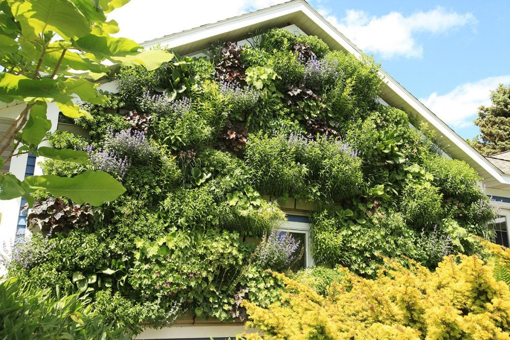Residential Garage with Perennial Living Wall, After 3 Winters
