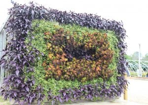 Combination of annuals in a square shape.