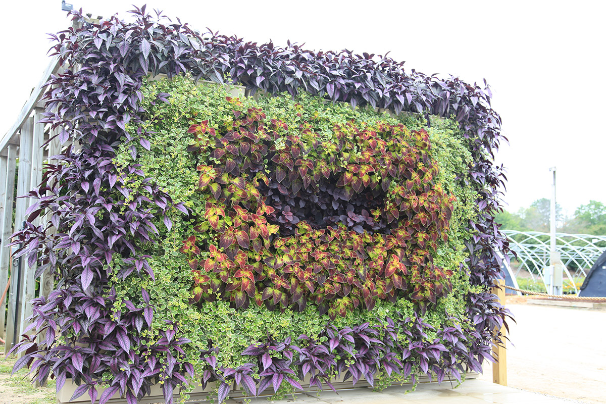 Tunnel-shaped living wall planted with strobilanthes, plectranthus and coleus.