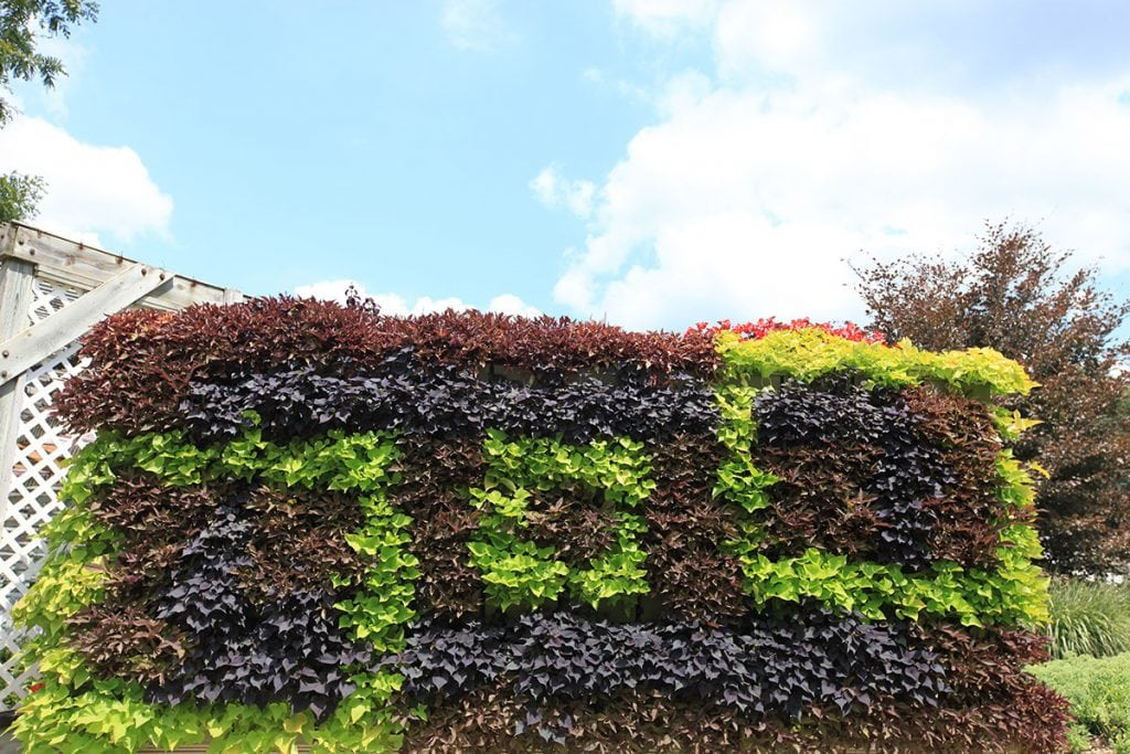 Geometric Pattern Grown in an Outdoor LiveWall