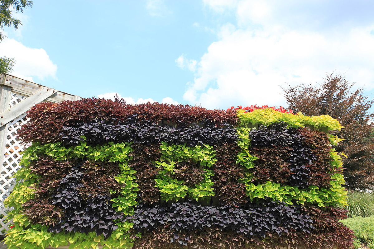 Green wall in a geometric pattern.