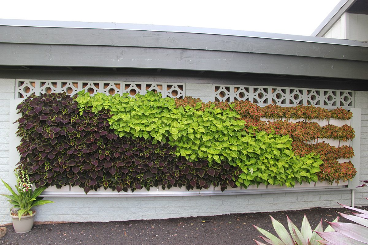 Red, purple, and green plants in Hawaiian Sunshine's LiveWall green wall system.