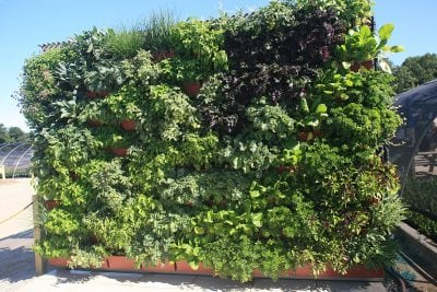 Vertical garden planted with fresh herbs and vegetables.