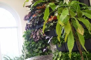 The Butterfly Atrium at Hershey Gardens Indoor Green Wall