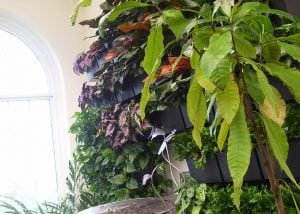 The Butterfly Atrium at Hershey Gardens includes a green wall planting.