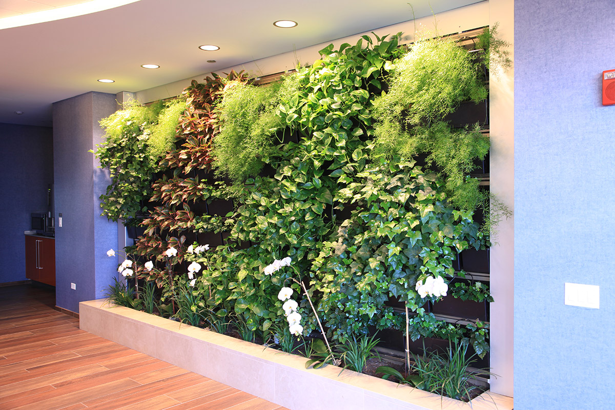 Living walls that work livewall green wall system - How to make a living wall ...