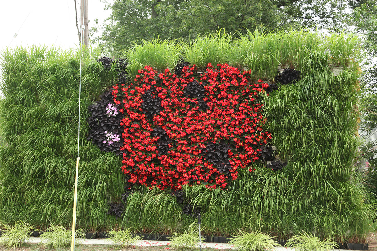 Ladybug LiveWall pattern shaped with a mix of annuals and perennials.
