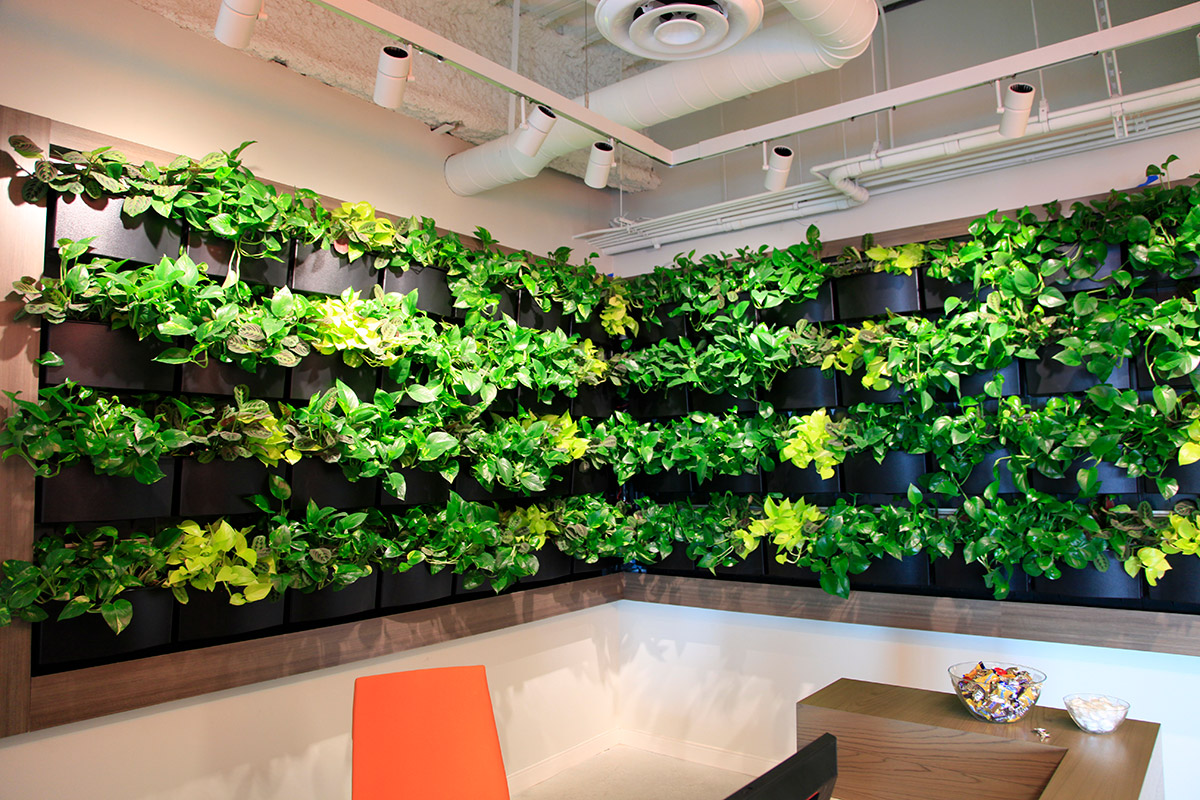 Indoor living walls promote a better work environment.