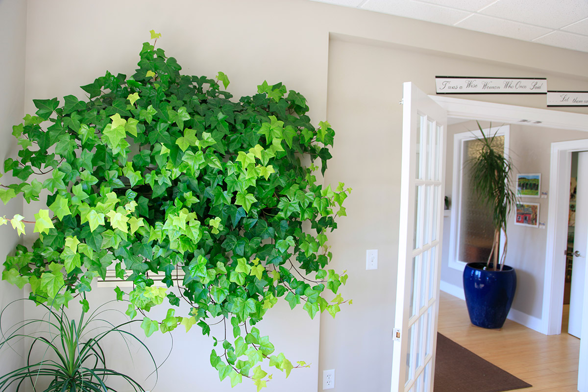 A Small Livewall With Hedera Neon