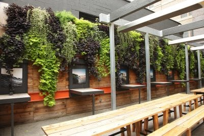Living walls planted with annuals are very easy regardless of climate, with comparatively fewer maintenance events than perennials.