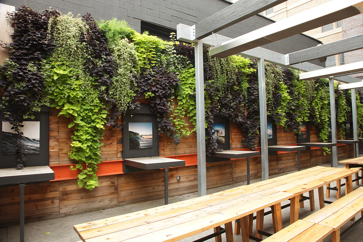 Contrasting plant colors create a visually pleasing vertical garden.