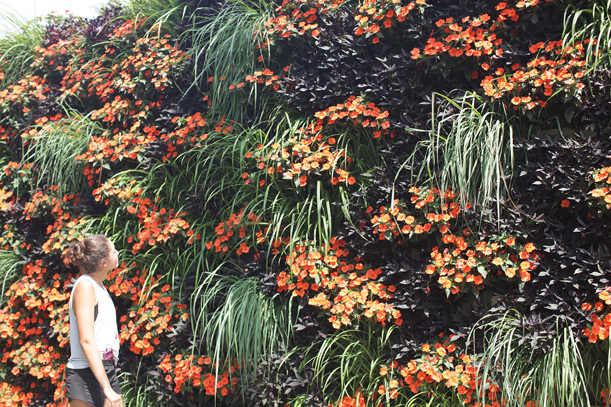 Woman admiring a LiveWall living wall of orange and purple annuals.