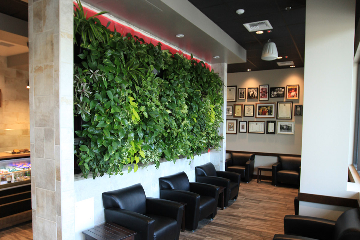 A view of the lush, green indoor LiveWall installed at Peet's Coffee of San Diego, CA.