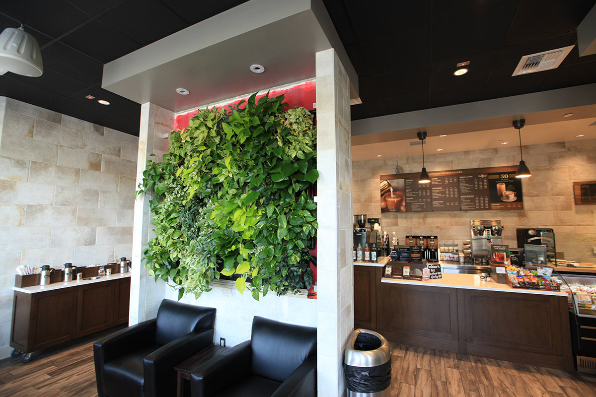 A green LiveWall in front of the cafe counter at Peet's Coffee in San Diego, CA.