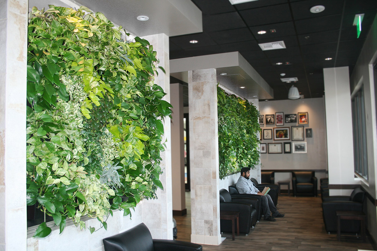 Indoor living walls such as this one improve indoor air quality.