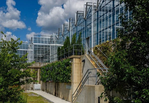 Outdoor green walls grow food and vegetables at Phipps Conservatory.