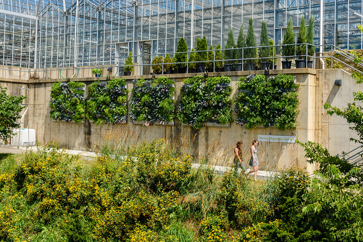 LiveWall installation at Phipps Conservatory grows vegetables, greens and herbs.