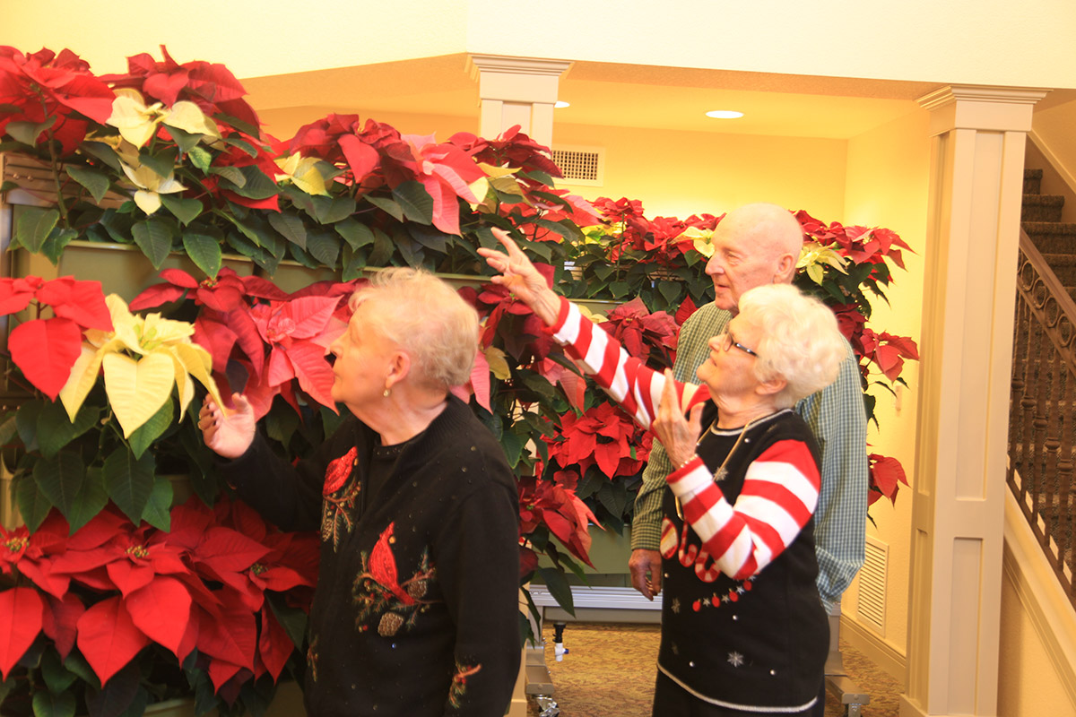 Residents of senior living community enjoy the bright holiday living wall planted with red poinsettias.