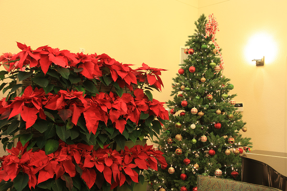 A living wall of poinsettias perfectly complements this Christmas tree in an senior living community.