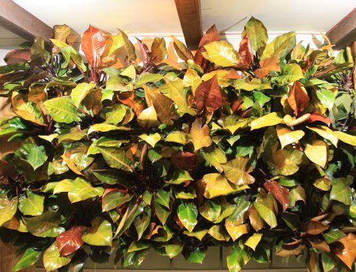 Prince of Orange and McColley's Finale Philodendrons Vertical Garden