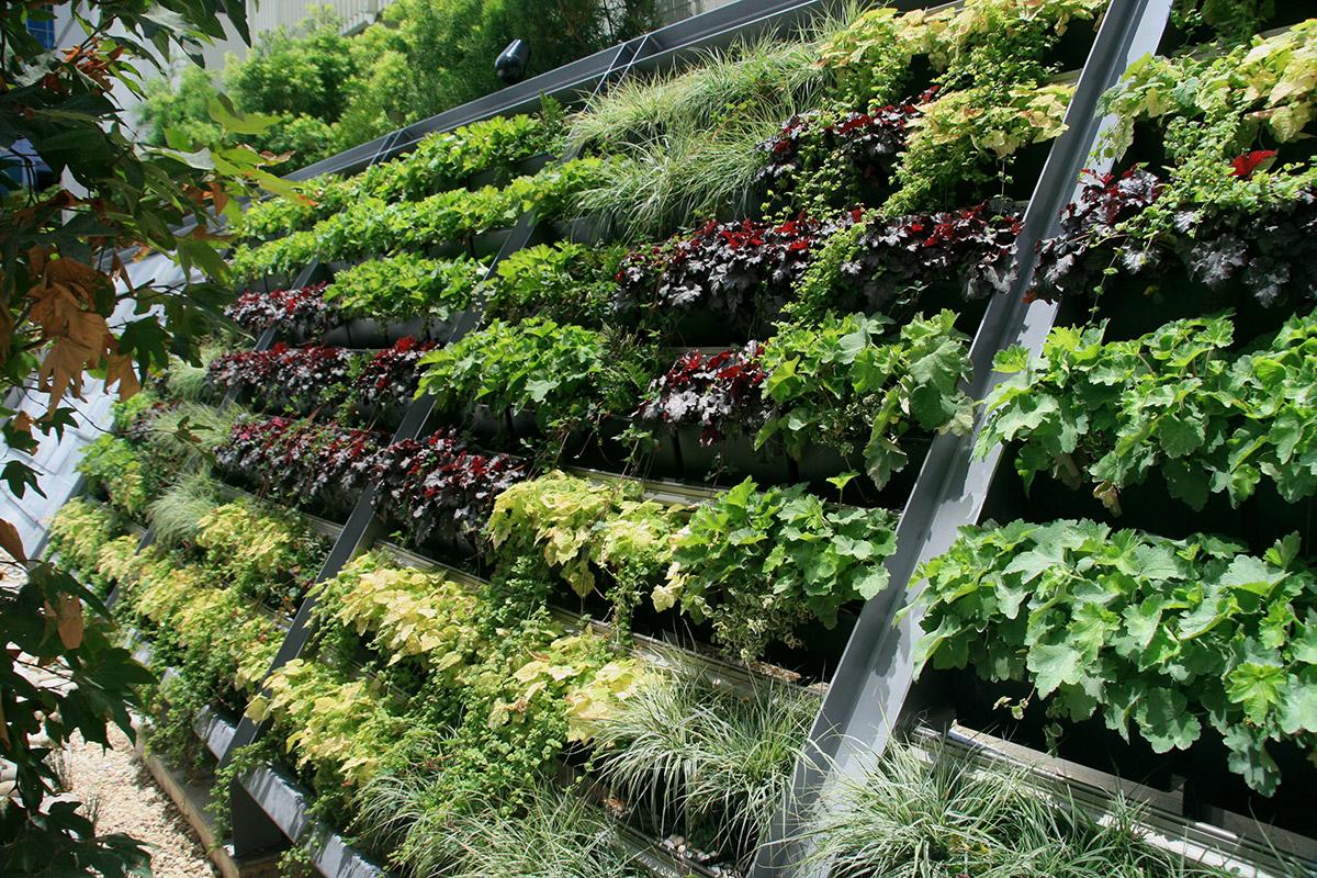 Living Walls That Work - LiveWall Green Wall System on design your garden, japanese zen garden, designing an office, flower garden,