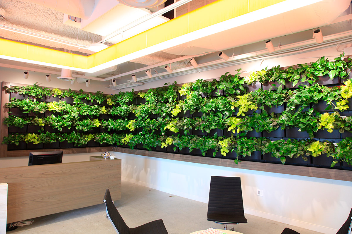 Varying shades of green plants create living art in the reception area.