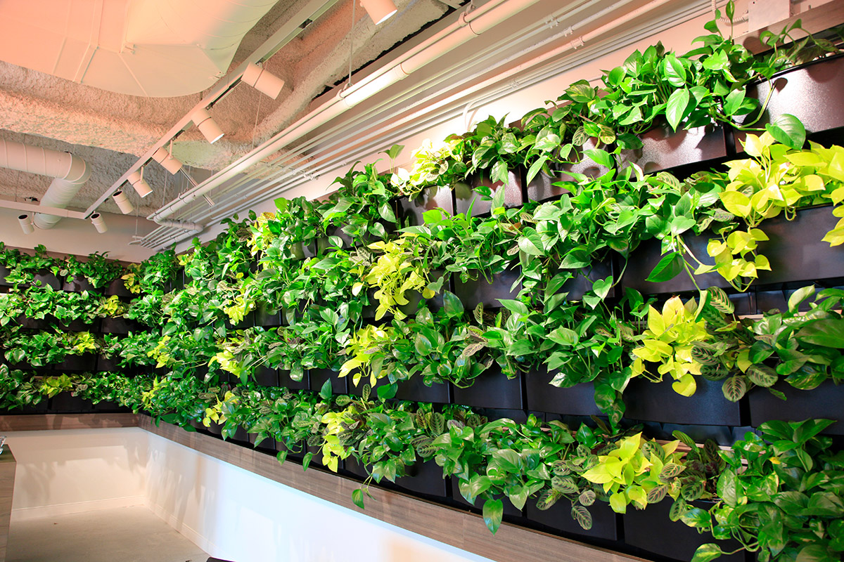 This living wall expands across two walls.