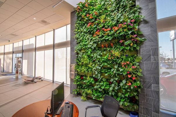 Indoor Living Wall at LAcarGUY's Subaru Pacific Dealership