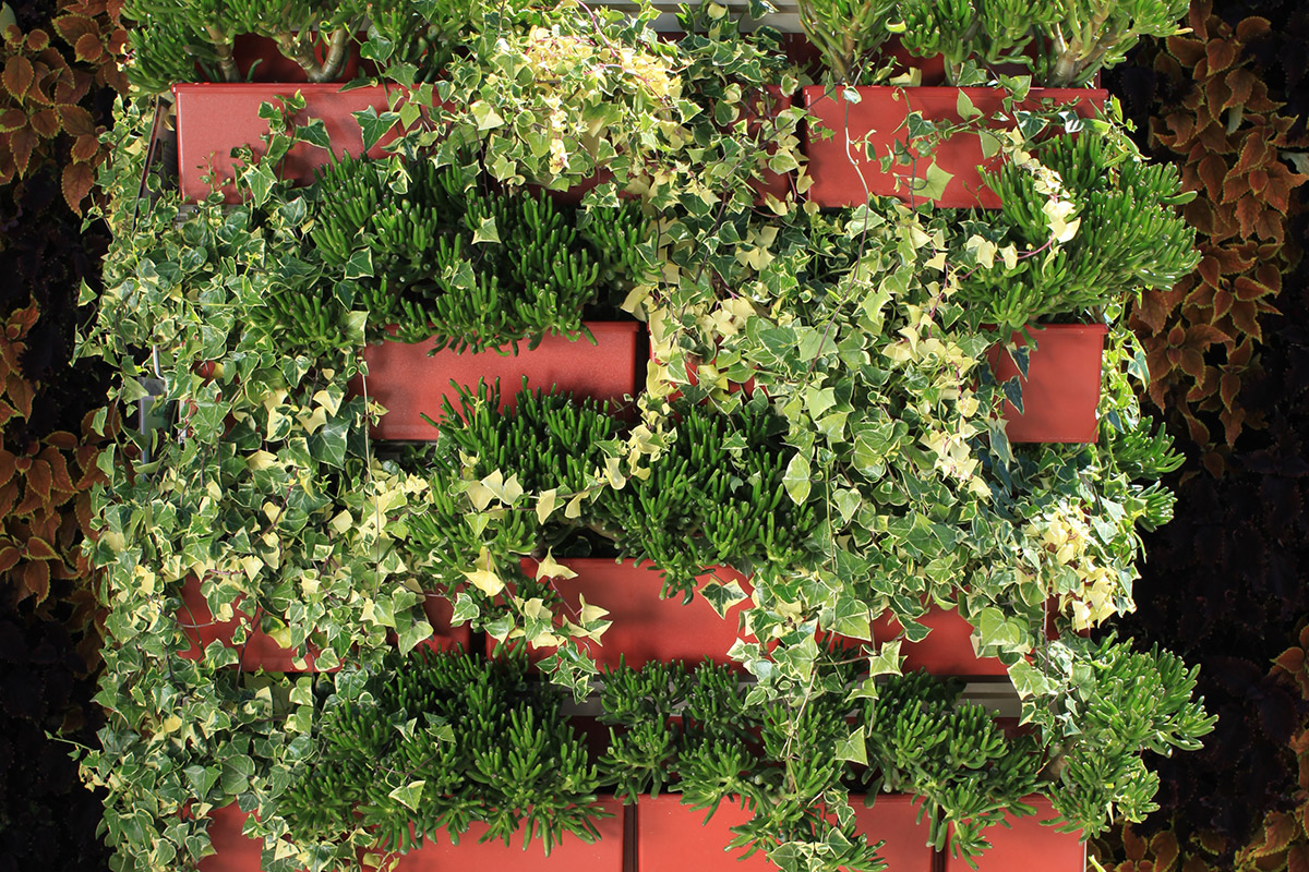 1; 2. ; . Succulents In Red Living Wall ...